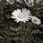 photo B/W