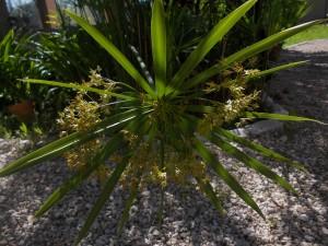 Les plante exotiques! dscn1478-300x225